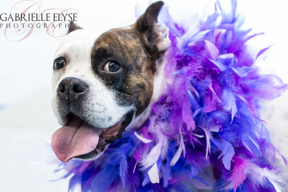 Miss Sophia- Ready for Mardi Gras?!