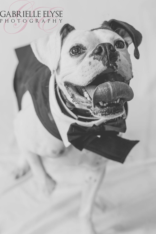 boxer rescue calendar