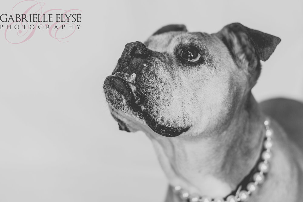 senior dog photo session