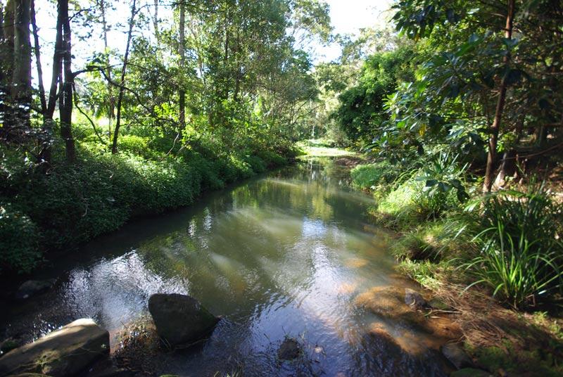 The creek that runs through our block