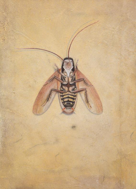 <Una Cucaracha>