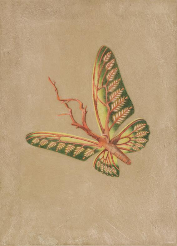 <Una Mariposa>