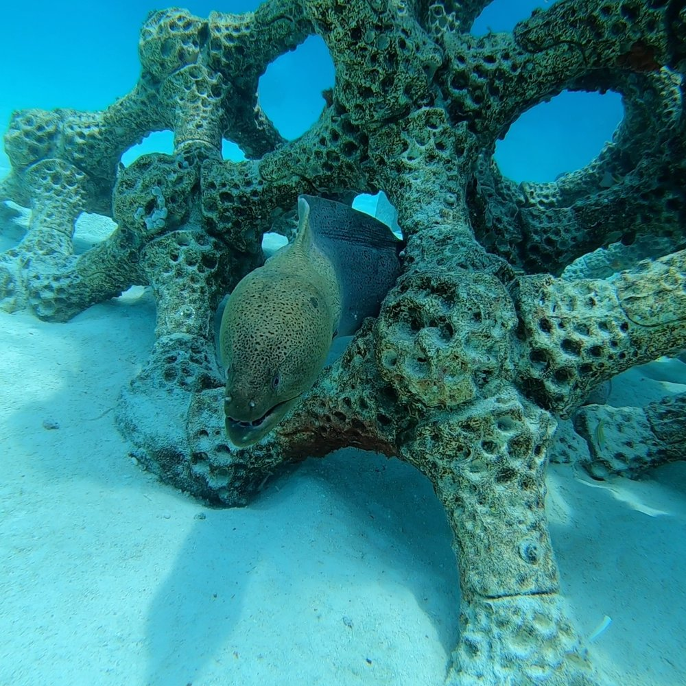 Recent encounter with moray eel… -