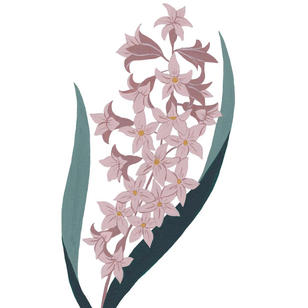 Hyacinth-2.jpg