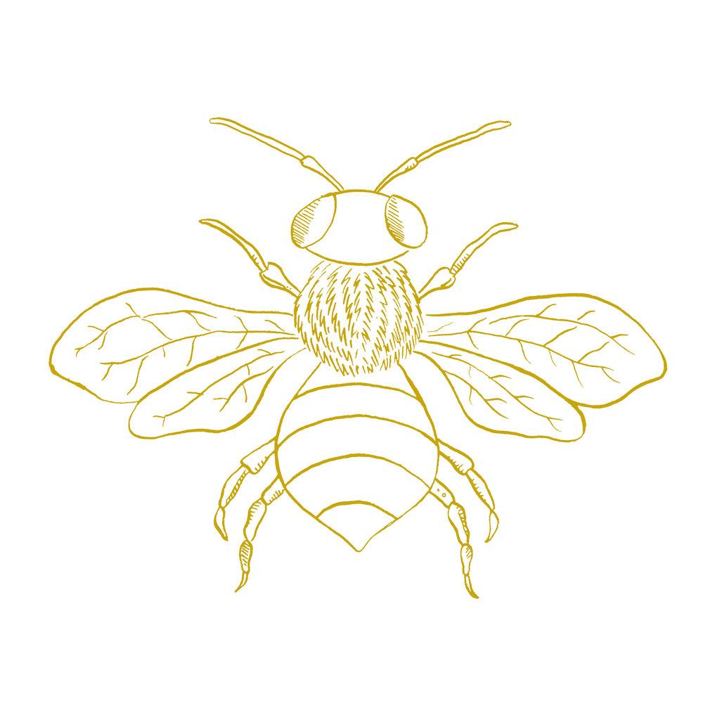 Bee Tee.jpg