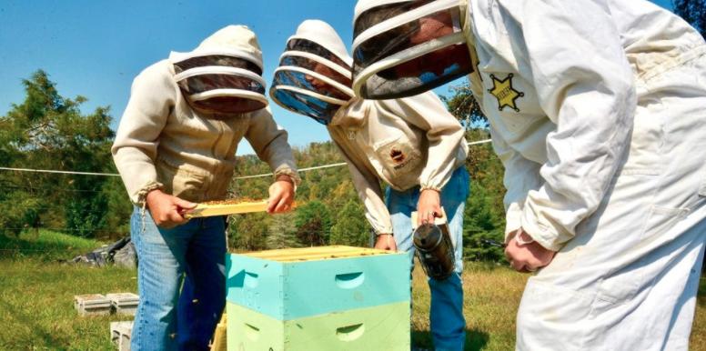 Appalachians learn beekeeping skillsJohn Farrell