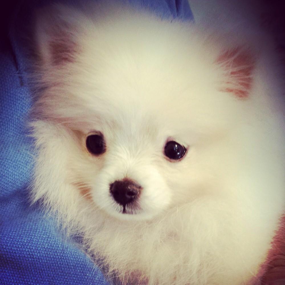 Little Woof Pack Dog