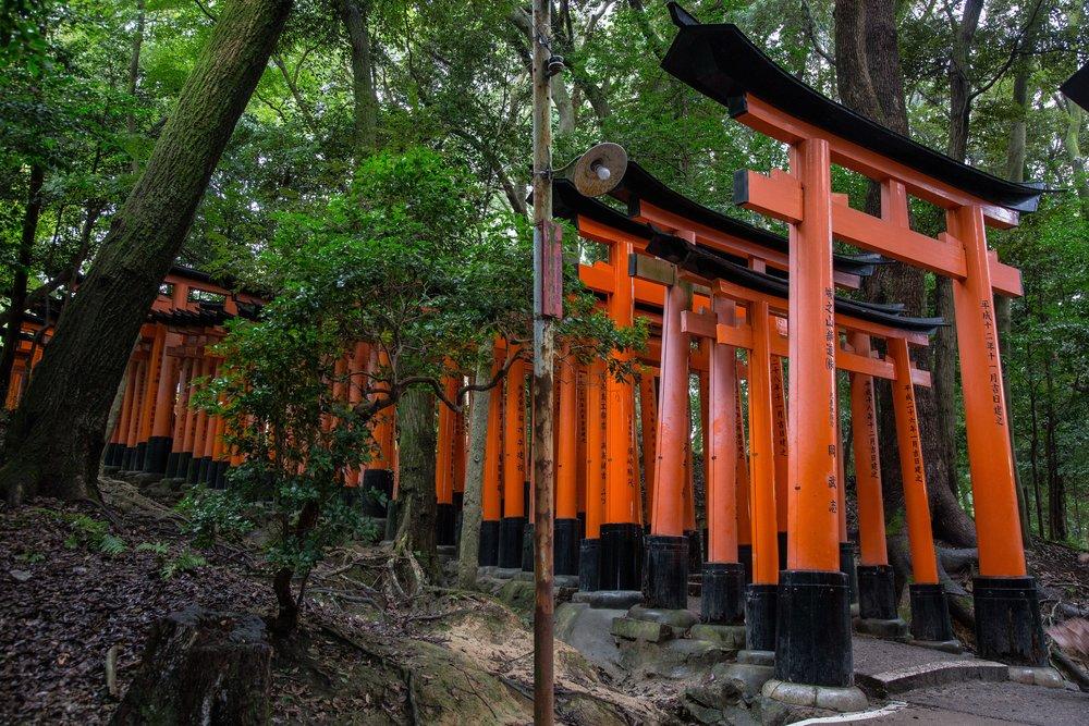 The Torii gates