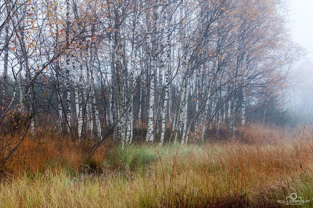 Herbststimmung im Moor