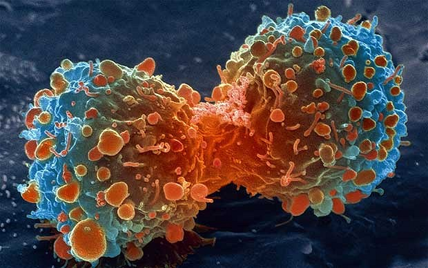 10-myths-about-cancer-are-they-true