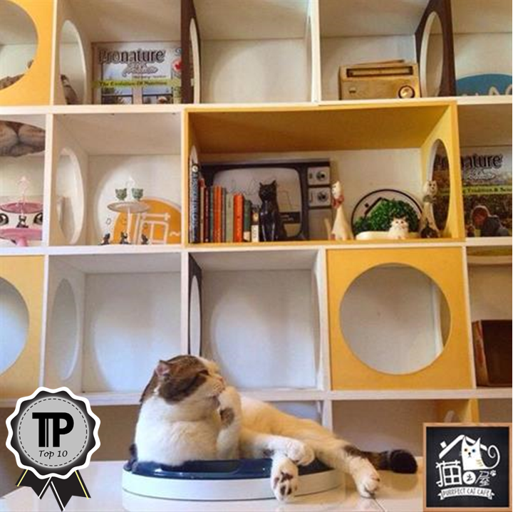 malaysias-top-10-pet-friendly-cafes-purrfect-cat