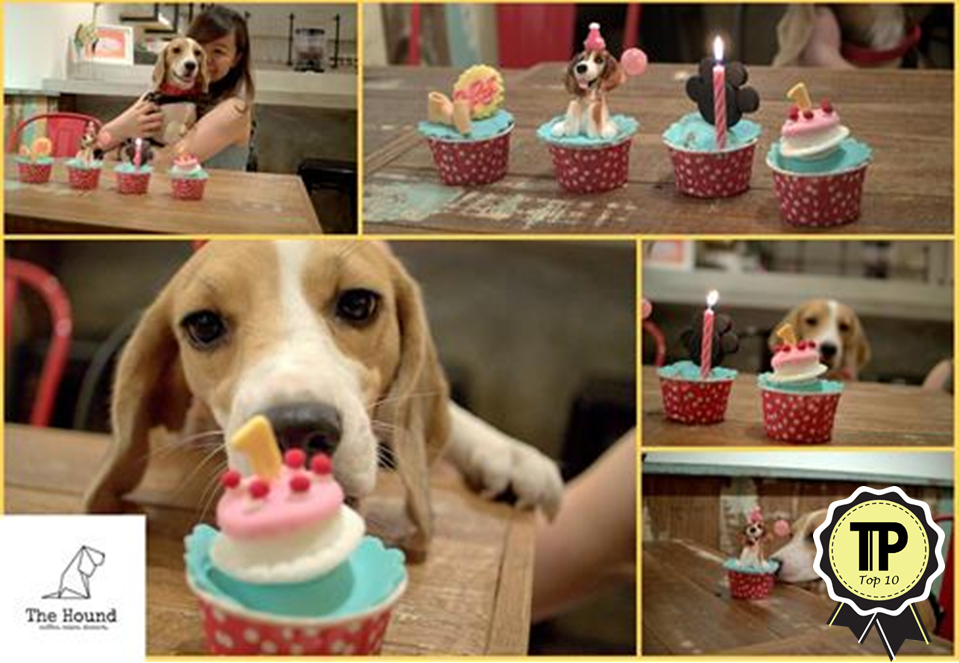 malaysias-top-10-pet-friendly-cafes-the-hound