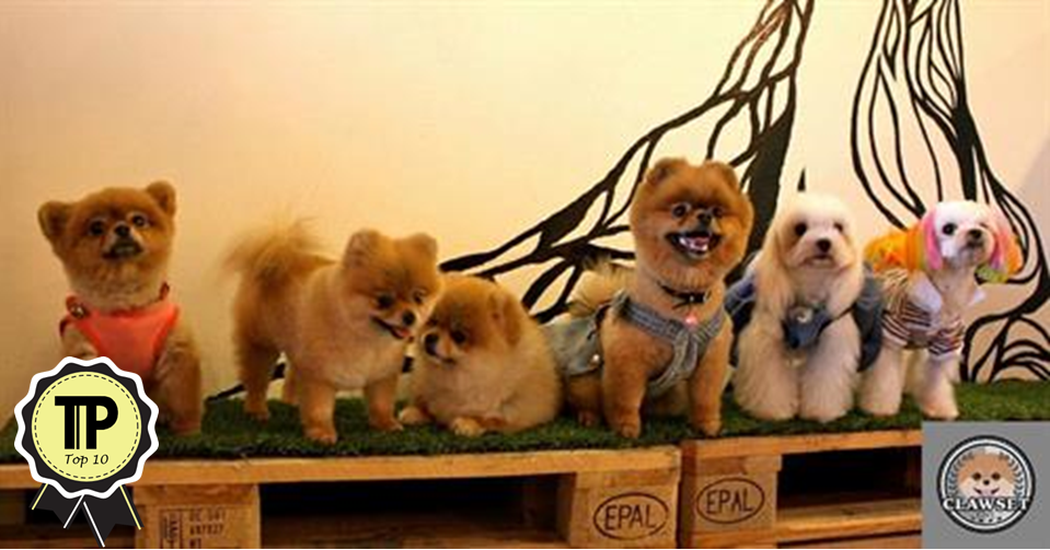 malaysias-top-10-pet-friendly-cafes-clawset-cafe