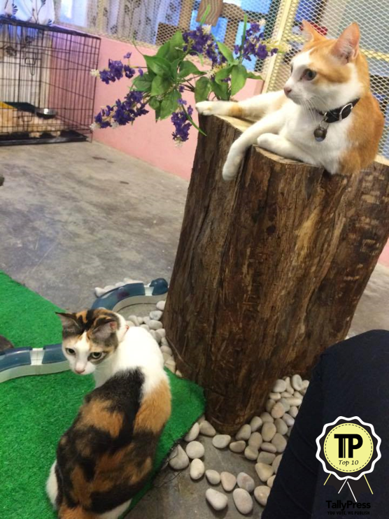 Pet Playground Top 10 Pet Boarding Centers in Klang Valley.png