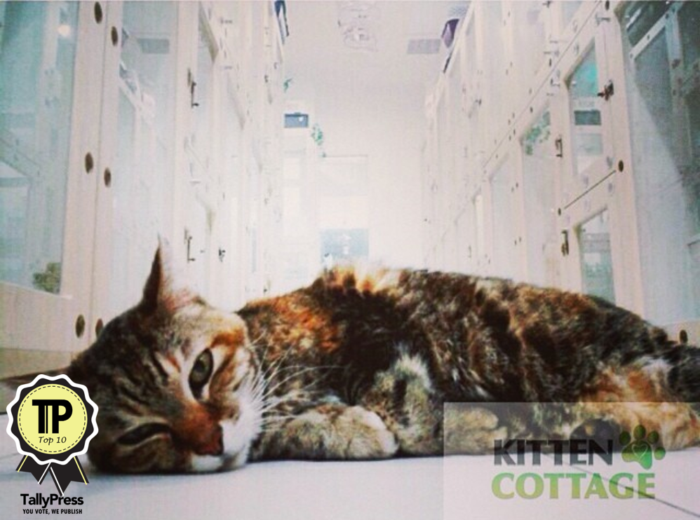 Kitten Cottage Top 10 Boarding Centers in Klang Valley.png