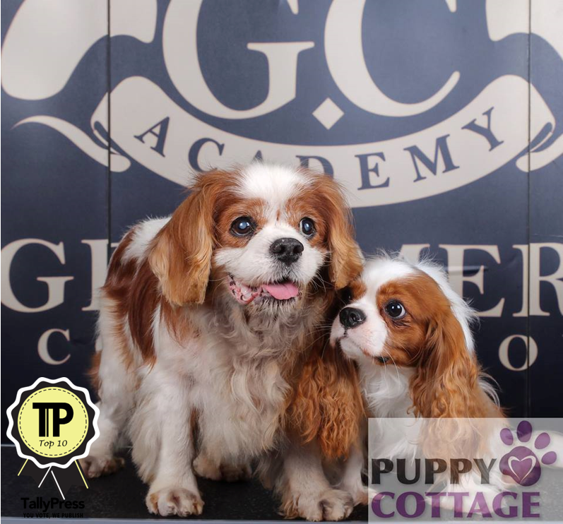 Puppy Cottage Top 10 Pet Boarding Centers in Klang Valley.png