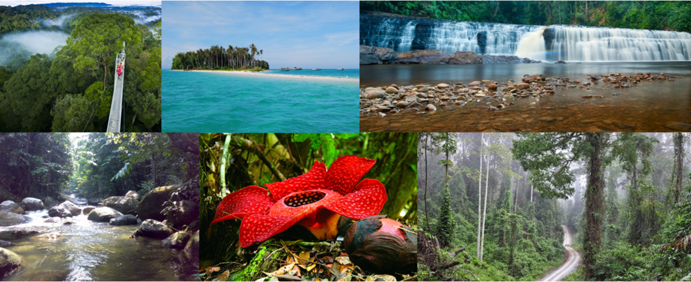 6-must-visit-conservation-areas-in-sabah-for-nature-explorers