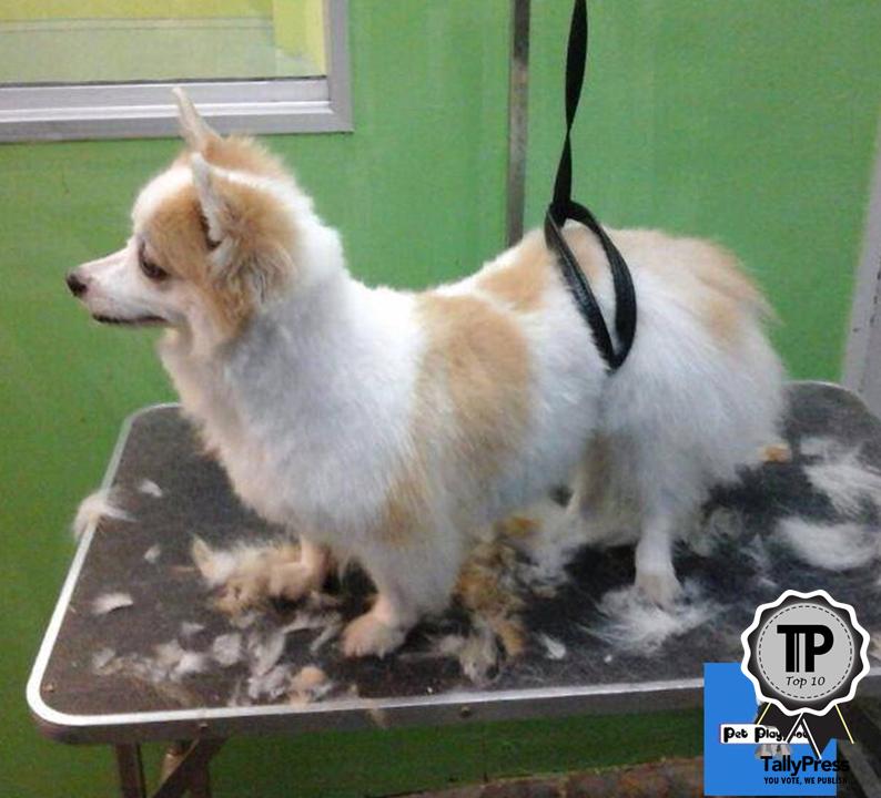malaysias-top-10-pet-grooming-centres-pet-playground