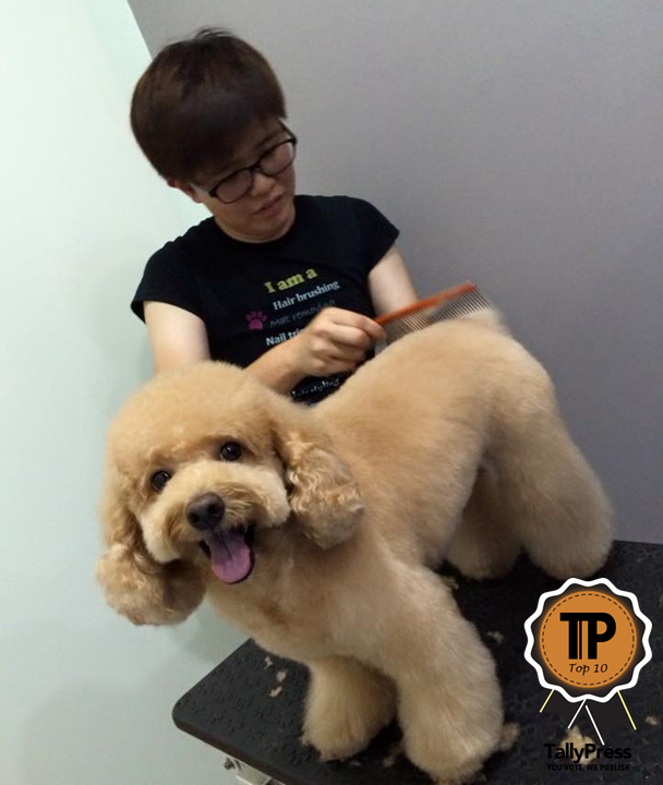 malaysias-top-10-pet-grooming-centres-yin-mobile-pets-grooming-service