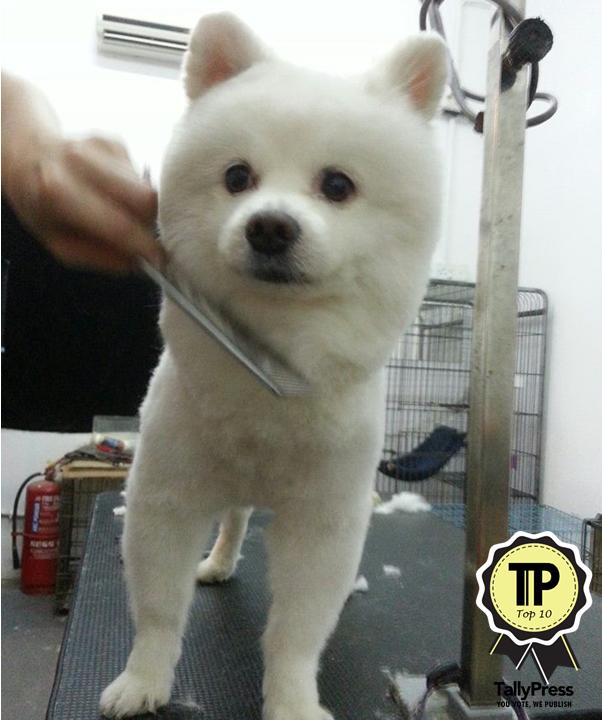 malaysias-top-10-pet-grooming-centres-diva-pets