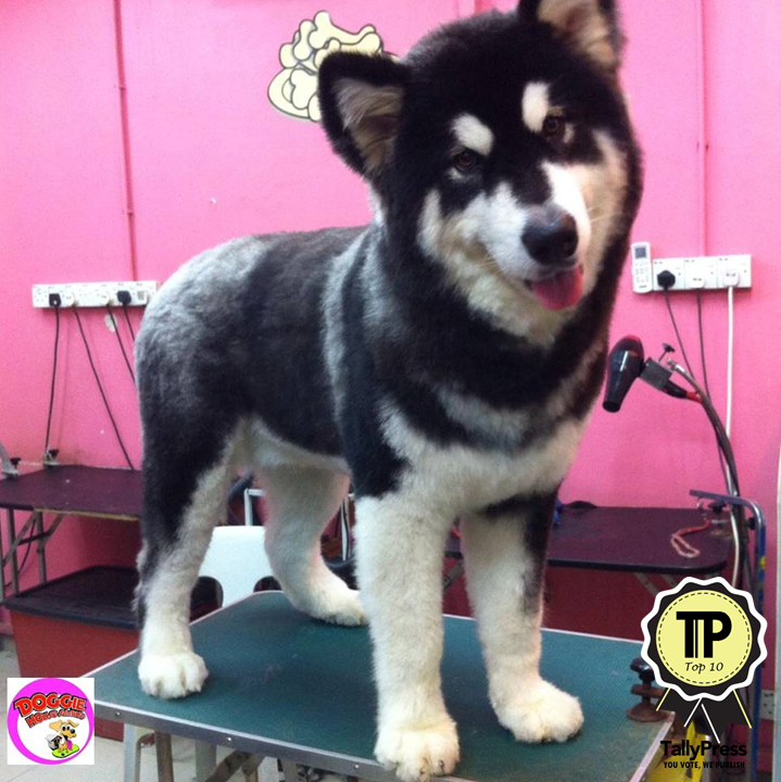 malaysias-top-10-pet-grooming-centres-doggie-house