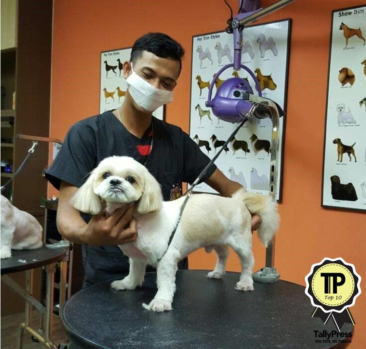 malaysias-top-10-pet-grooming-centres-global-pets
