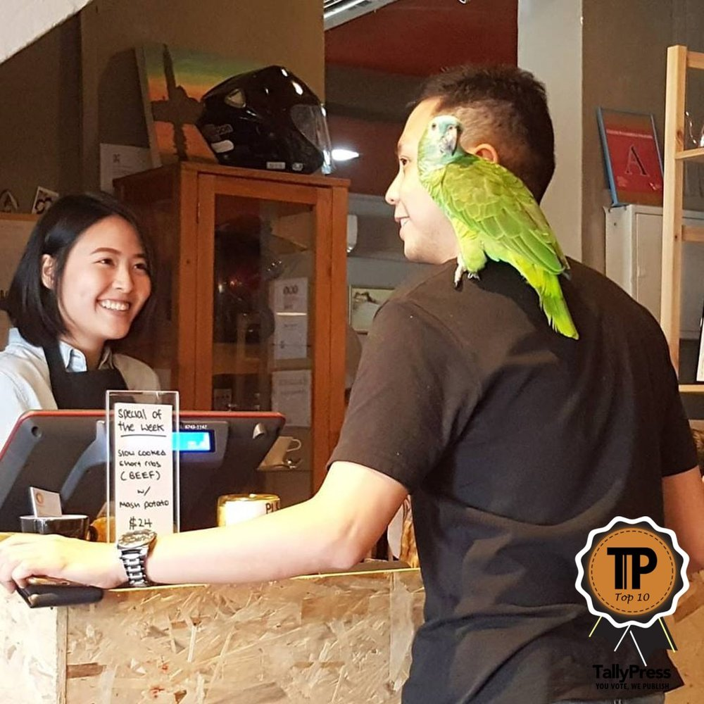 singapores-top-10-pet-friendly-cafes-sun-ray-cafe.jpg