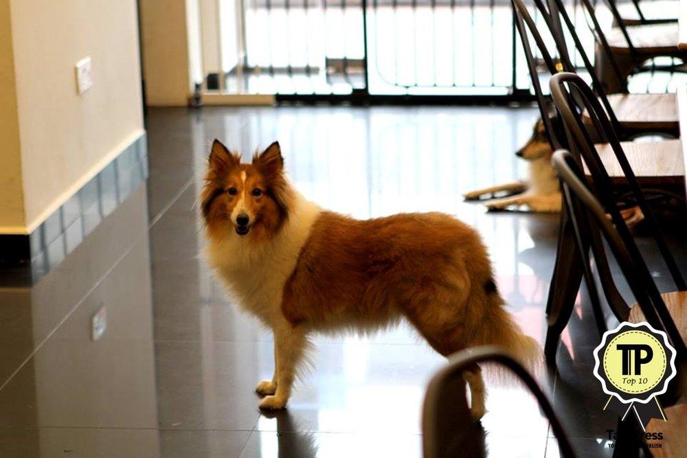 singapores-top-10-pet-friendly-cafes-paws-n-pans.jpg