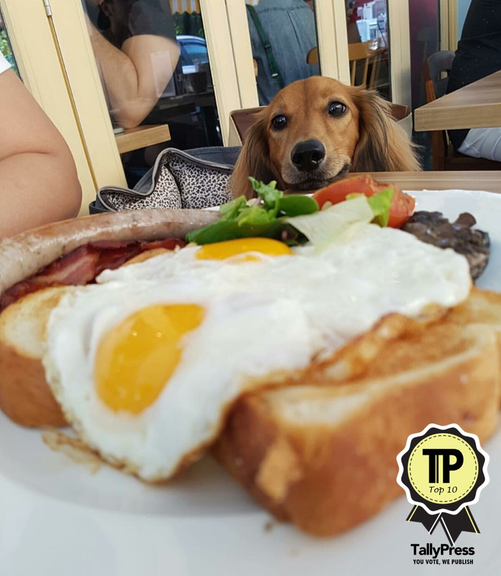 singapores-top-10-pet-friendly-cafes-w39-bistro-and-bakery.jpg