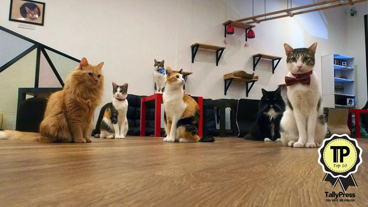 singapores-top-10-pet-friendly-cafes-the-cat-cafe.jpg