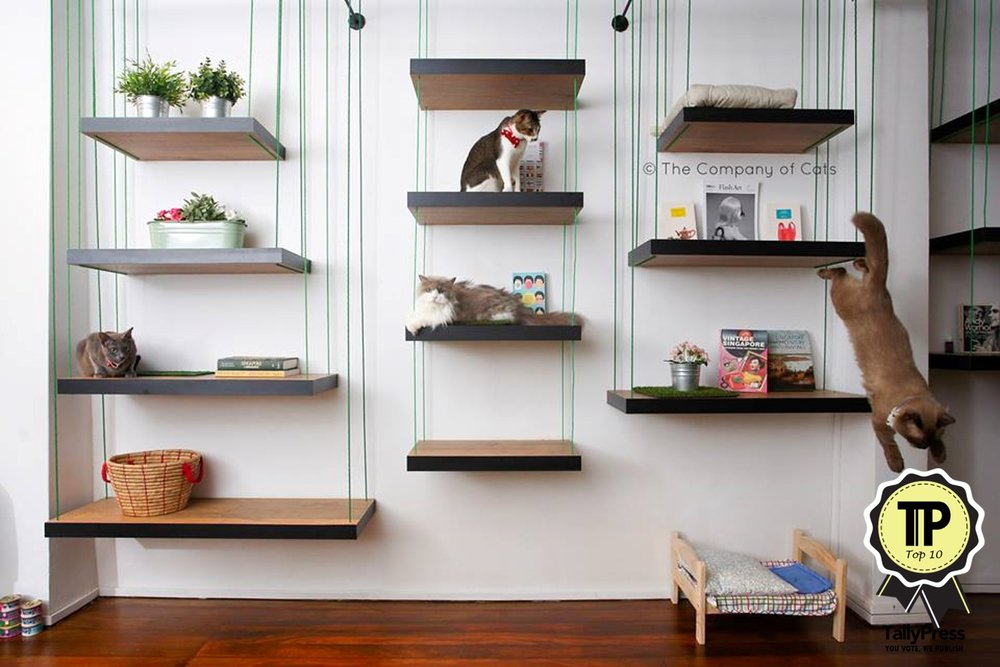 singapores-top-10-pet-friendly-cafes-the-company-of-cats.jpg
