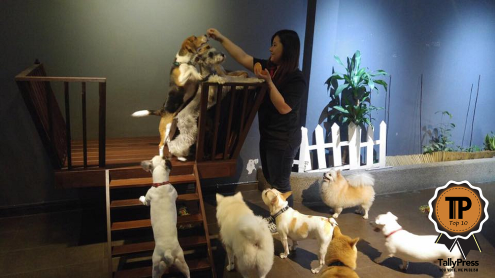 top-10-pet-boarding-centres-in-singapore-happy-dog