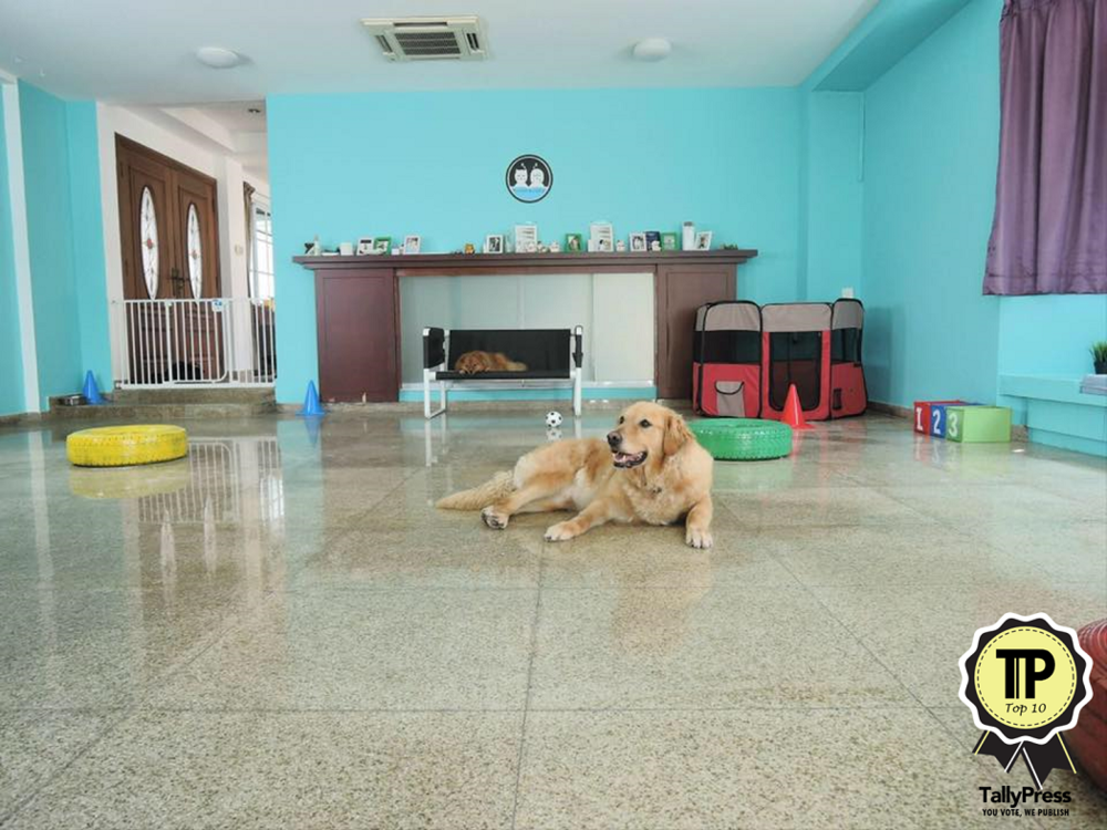 top-10-pet-boarding-centres-in-singapore-wanderlodge