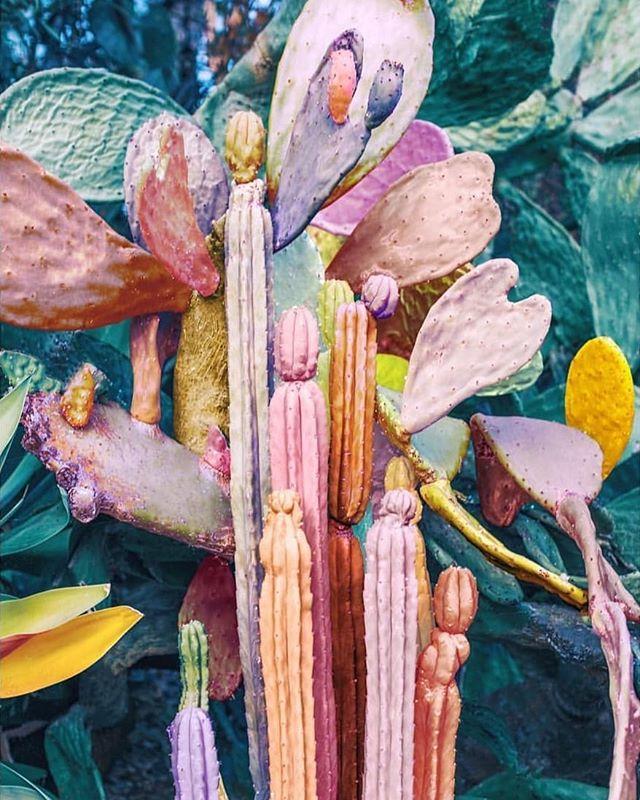 Totally crushing on these gorgeous colours by the talented @nicholasscarpinato  I need this in my life 🙌☀️🌵