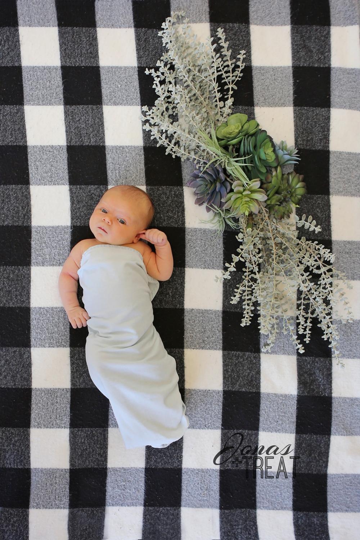 Arizona newborn photography with southwest succulent design accent. Newborn photograph with succulents