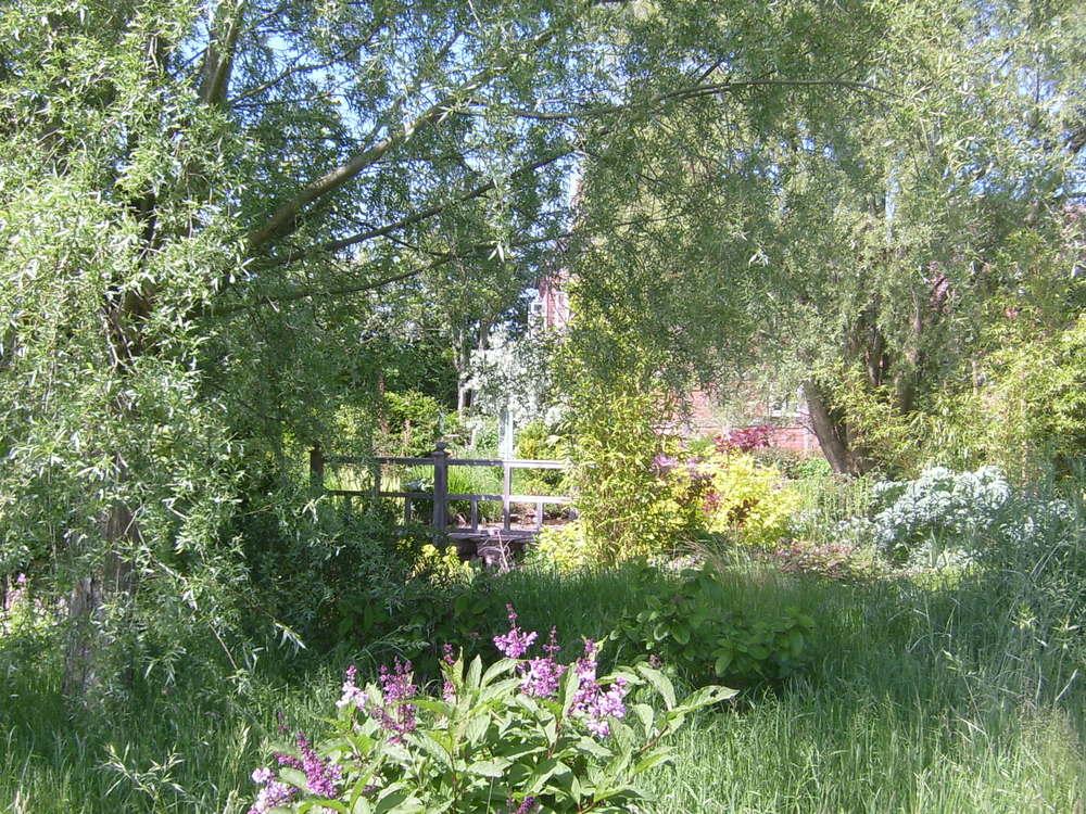 Pond garden.jpg