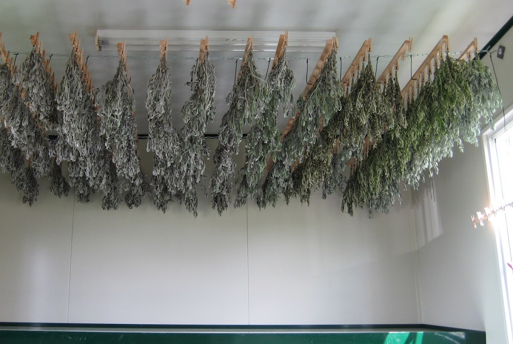 We dry our herbs naturally. Air-drying does take longer than kiln or other mechanical drying alternatives, however we find this achieves a richer product with minimal loss of aromatic oils which give the smoke their powerful properties.