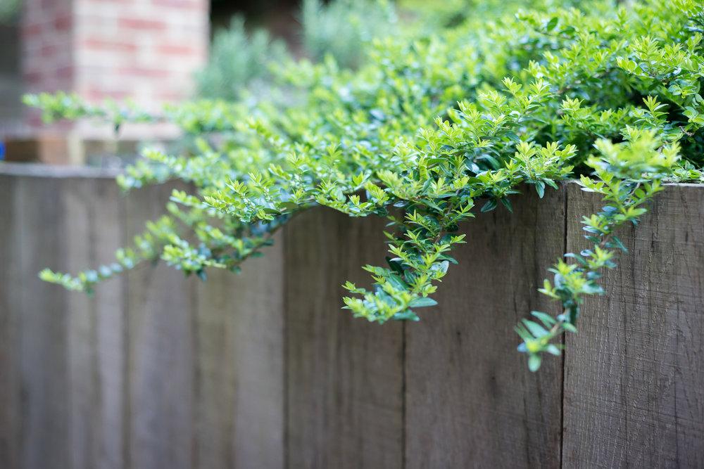 Oak Post Retaining Wall