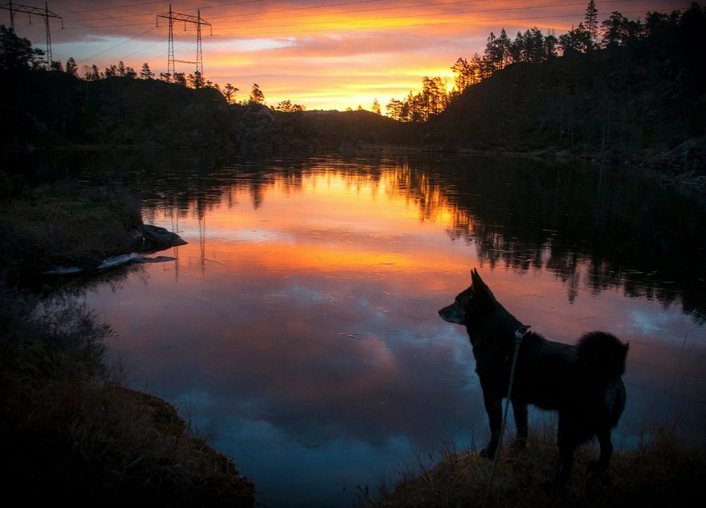 Morgonstund – ikkje noko tull i grunn. Det fekk fotograf Atle Helland oppleva ved Guriflåtotjødna ved Utåker, på veg opp til Dyrrinda.