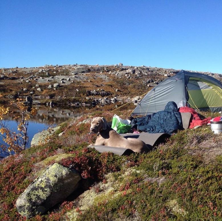 Godt liv, 687 m o.h. (Foto:Mari Teigen Varanes)