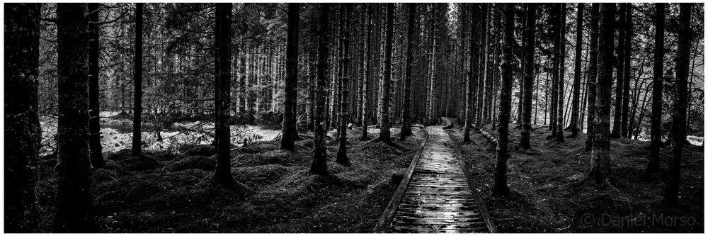 «Skog i Handelandsdalen». (Foto: Daniel Morso)