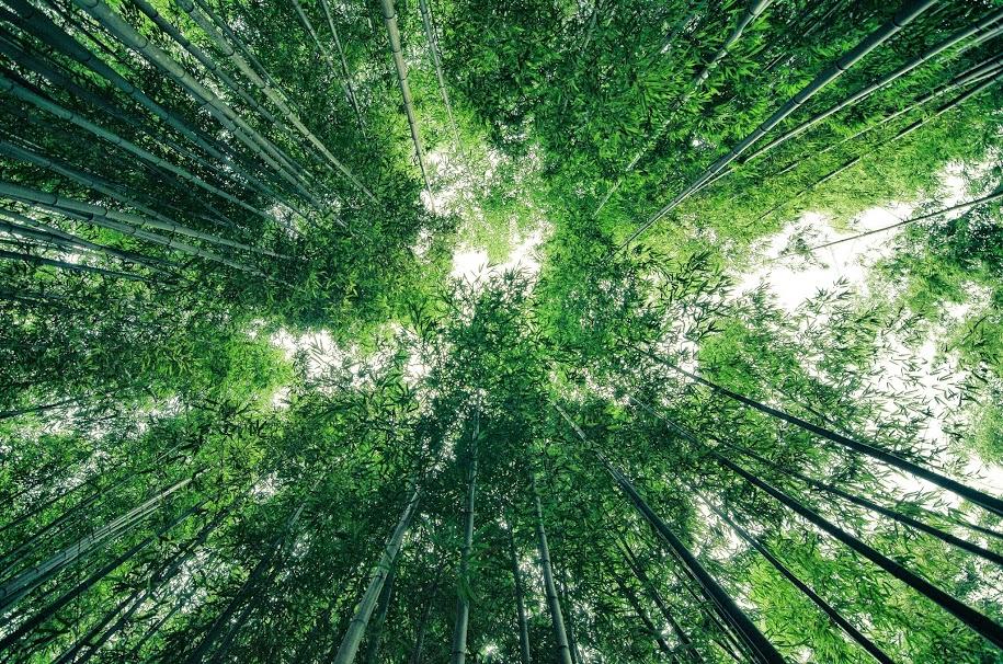 죽녹원 Bamboo forest