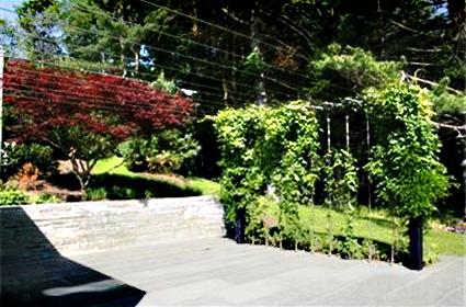 Backyard 03.jpg