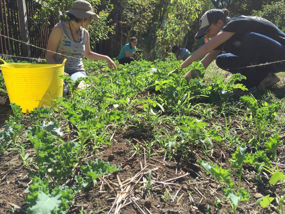 Volunteers from Whole Food Market help out at the Wedgewood Urban Garden.