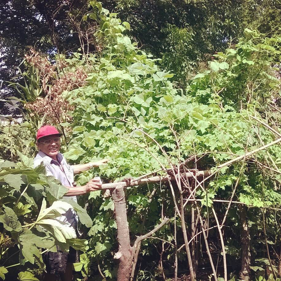 Tika Adikhari, a Bhutanese gardener at the Wedgewood Urban Garden, proudly shows off his plot.