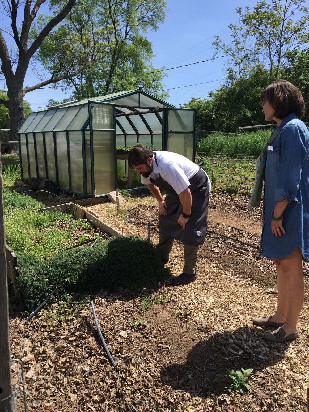 The chef checks out TNFP's kitchen garden at Woodmont.