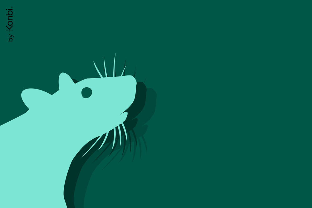Rat-Cancer, male: characteristic, compatibility and interesting facts
