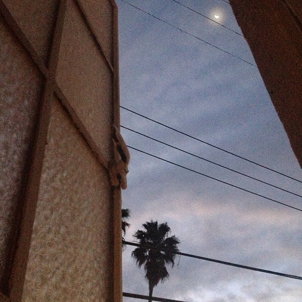 View_of_the_waning_moon__from_the_bath_this_morning._Thank_god_it_s_waning_-_that_was_one_hell_of_a_full_moon._13.jpg