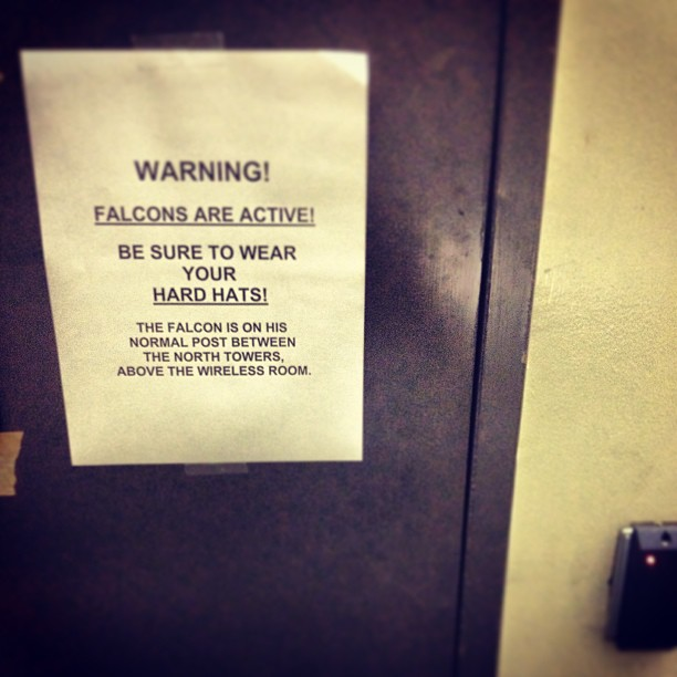 Found_this_at_the_top_of_20_flights_of_stairs._Forgot_about_the_pic_until_today_when_I_saw_a_couple_falcons_wheeling_around_in_the_sky._15.jpg
