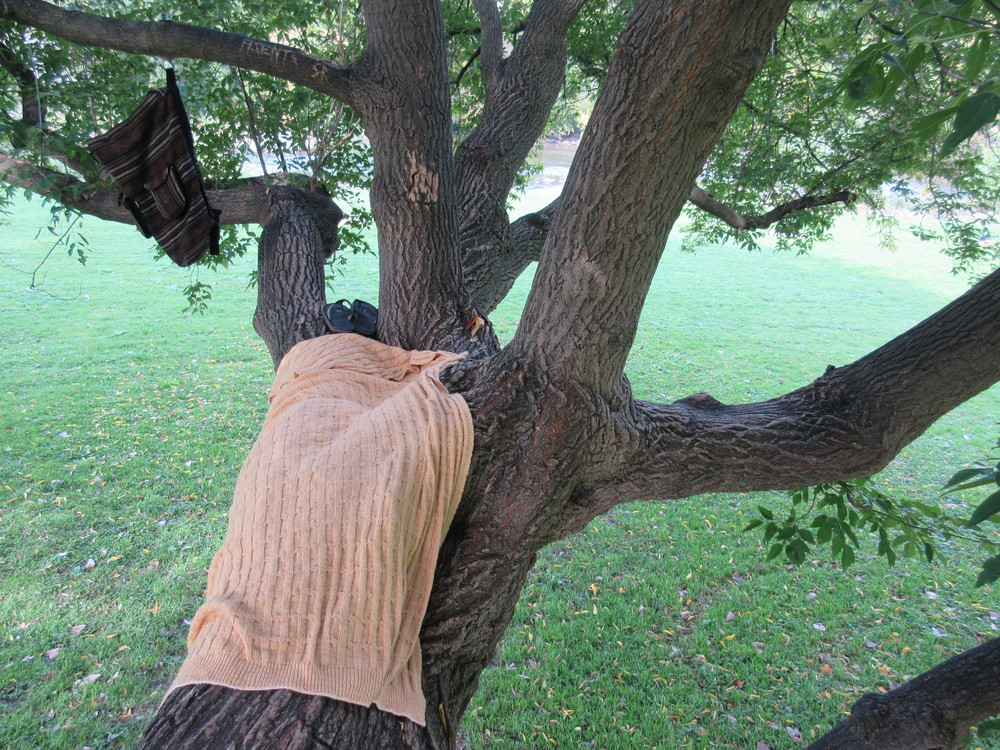 """""""My favourite spot in my entire neighbourhood. This is the mother tree. If you notice there's a backpack hanging, there's hooks for a swing… It's on less than a 45 degree angle and you can walk up it and lie down."""""""